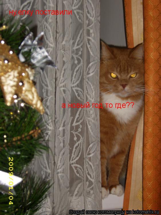 Котоматрица: ну,елку поставили а новый год то где??