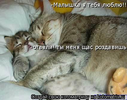 Котоматрица: -Малышка я тебя люблю!!! -отвали! ты меня щас роздавишь!