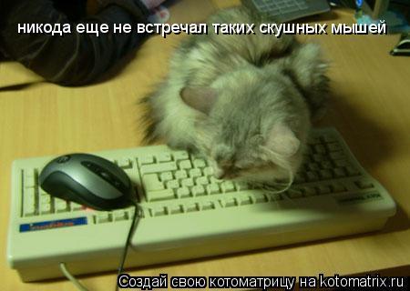 Котоматрица: никода еще не встречал таких скушных мышей