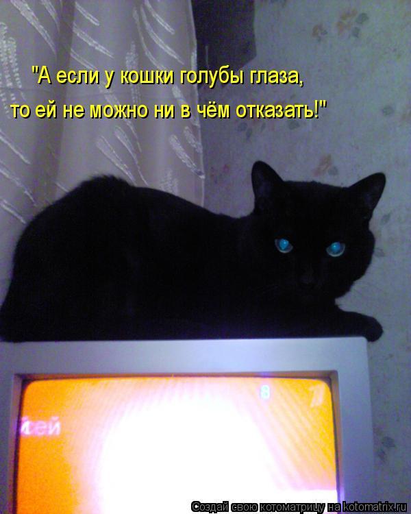 """Котоматрица: """"А если у кошки голубы глаза, то ей не можно ни в чём отказать!"""""""