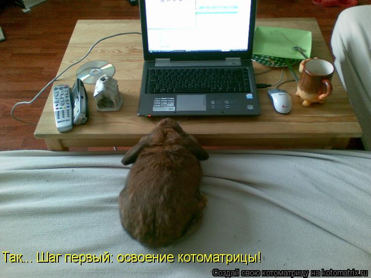 Котоматрица: Так... Шаг первый: освоение котоматрицы!