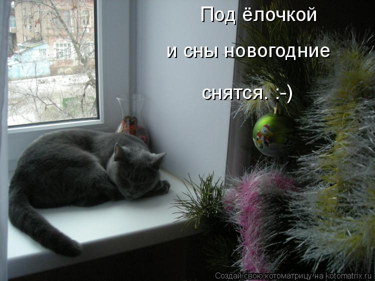 Котоматрица: Под ёлочкой и сны новогодние снятся. :-)