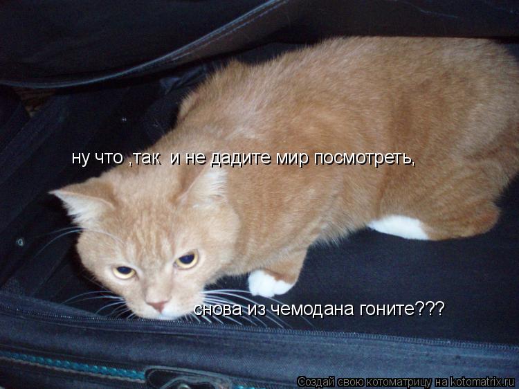 Котоматрица: ну что ,так  и не дадите мир посмотреть, снова из чемодана гоните???