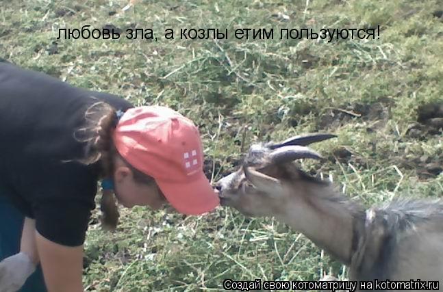 Котоматрица: любовь зла, а козлы етим пользуются!