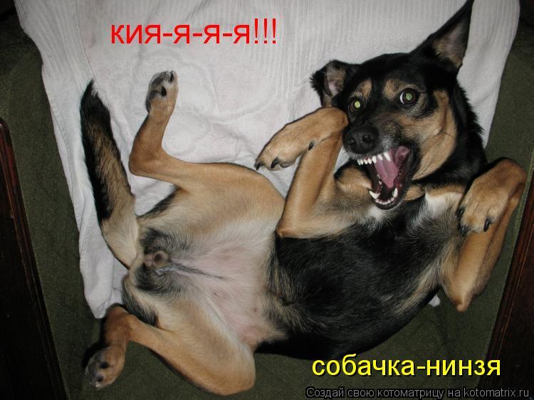 Котоматрица: кия-я-я-я!!! собачка-нинзя