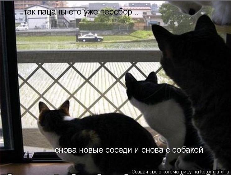 Котоматрица: так пацаны ето уже перебор...  снова новые соседи и снова с собакой