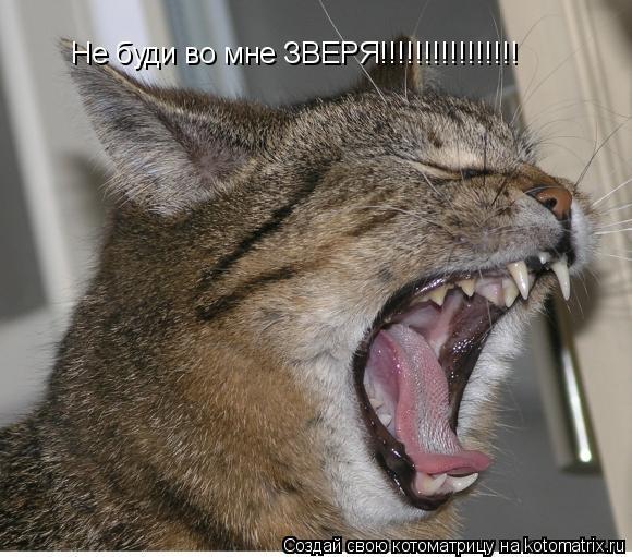Котоматрица: Не буди во мне ЗВЕРЯ!!!!!!!!!!!!!!!!