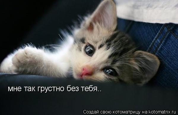 Котоматрица: мне так грустно без тебя..