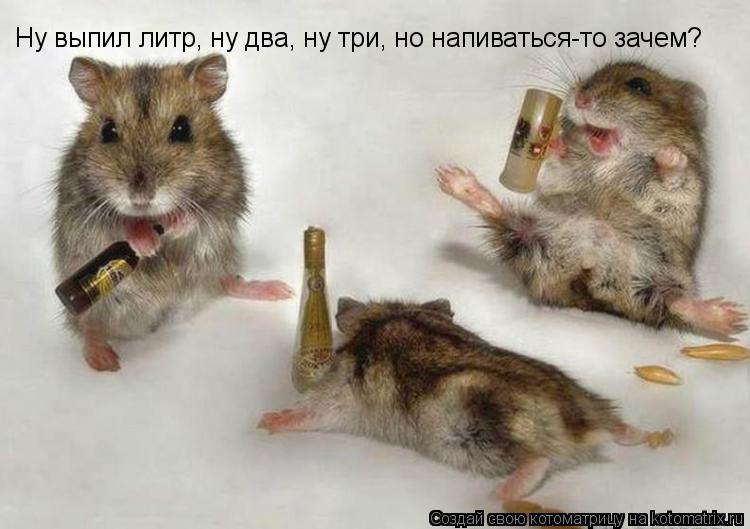 Котоматрица: Ну выпил литр, ну два, ну три, но напиваться-то зачем?