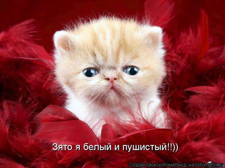 Котоматрица: Зято я белый и пушистый!!))
