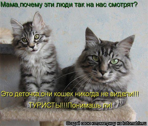 Котоматрица: Мама,почему эти люди так на нас смотрят? Это деточка,они кошек никогда не видели!!! ТУРИСТЫ!!!Понимашь ли!