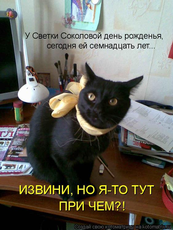 Котоматрица: У Светки Соколовой день рожденья, сегодня ей семнадцать лет... ИЗВИНИ, НО Я-ТО ТУТ  ПРИ ЧЕМ?!