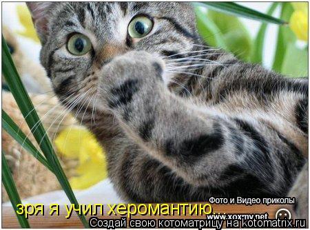 Котоматрица: зря я учил херомантию...