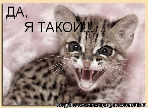 Котоматрица: ДА, Я ТАКОЙ!!!