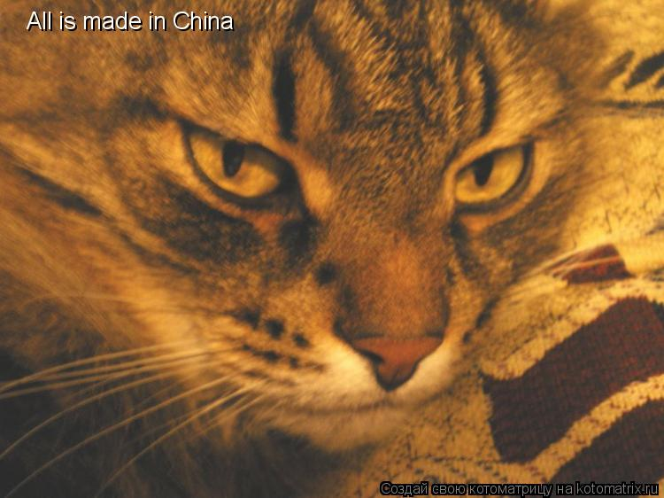Котоматрица: All is made in China