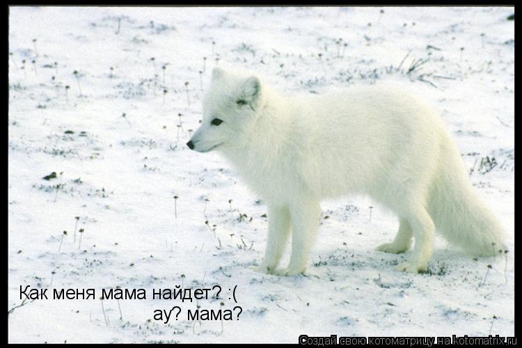 Котоматрица: Как меня мама найдет? :( ау? мама?