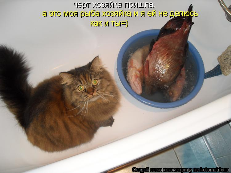 Котоматрица: черт хозяйка пришла. а это моя рыба хозяйка и я ей не делюсь как и ты=)