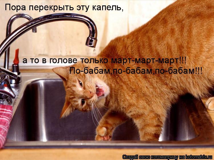 Котоматрица: Пора перекрыть эту капель, а то в голове только март-март-март!!! По-бабам,по-бабам,по-бабам!!!