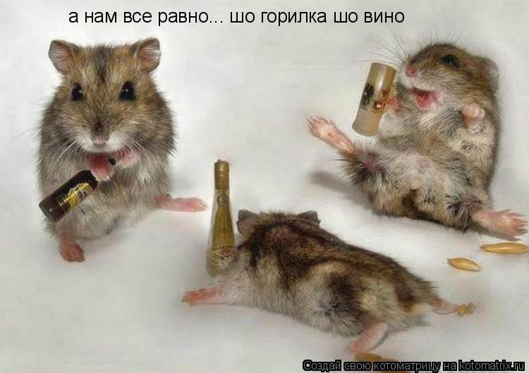 Котоматрица: а нам все равно... шо горилка шо вино