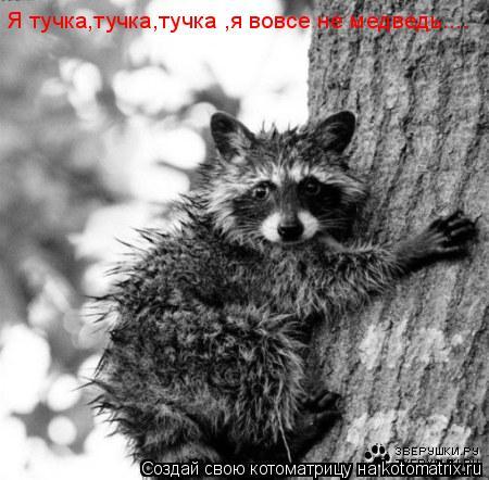 Котоматрица: Я тучка,тучка,тучка ,я вовсе не медведь....