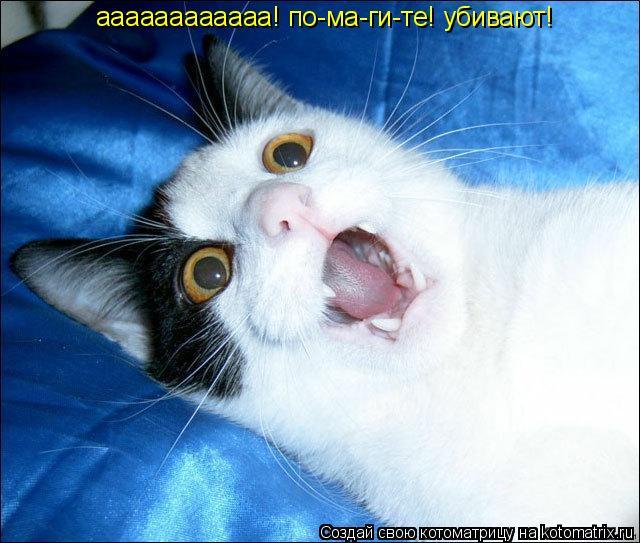 Котоматрица: аааааааааааа! по-ма-ги-те! убивают!