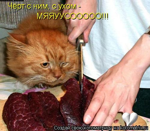 Котоматрица: Чёрт с ним, с ухом -  МЯЯУУСООООО!!!