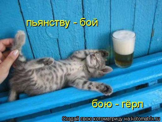 Котоматрица: пьянству - бой бою - гёрл