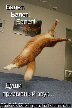 Котоматрица: Балет! Балет! Балет! призывный звук... Души