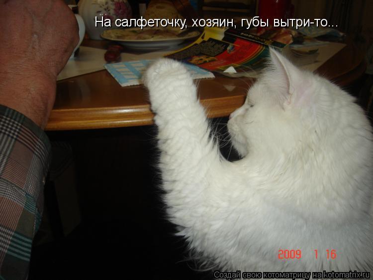 Котоматрица: На салфеточку, хозяин, губы вытри-то...