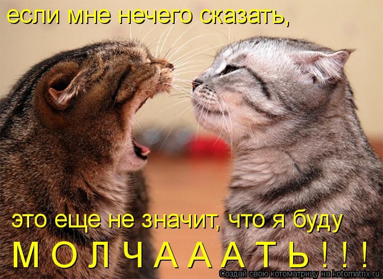 Котоматрица: если мне нечего сказать, это еще не значит, что я буду М О Л Ч А А А Т Ь ! ! !