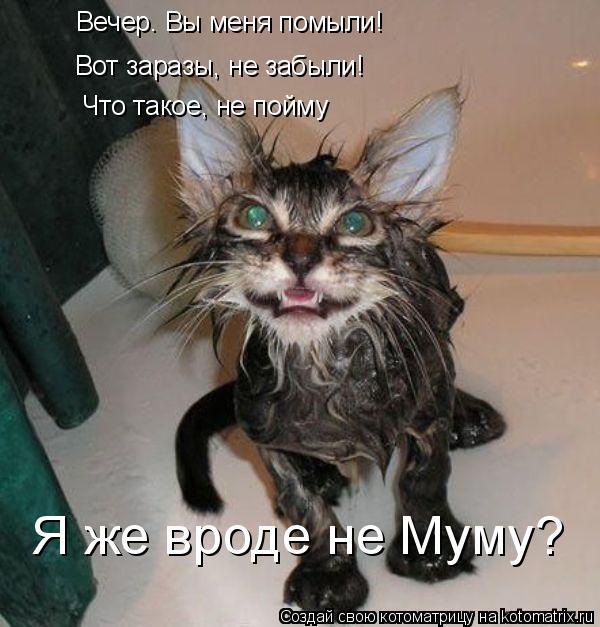 Котоматрица: Вечер. Вы меня помыли!  Вот заразы, не забыли!  Что такое, не пойму Я же вроде не Муму?