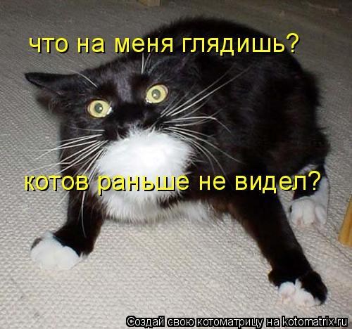 Котоматрица: котов раньше не видел? что на меня глядишь?