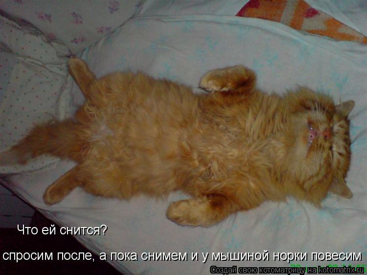 Котоматрица: Что ей снится? спросим после, а пока снимем и у мышиной норки повесим