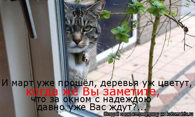 Котоматрица: И март уже прошёл, деревья уж цветут, когда же Вы заметите, что за окном с надеждою давно уже Вас ждут?...