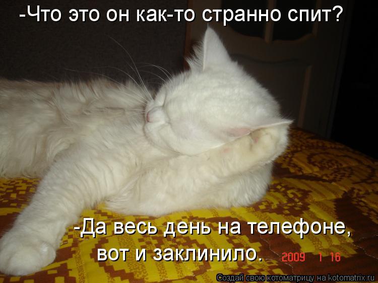 Котоматрица: -Что это он как-то странно спит? -Да весь день на телефоне, вот и заклинило.