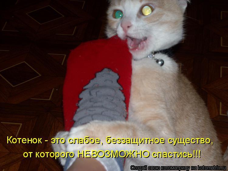Котоматрица: Котенок - это слабое, беззащитное существо, от которого НЕВОЗМОЖНО спастись!!!