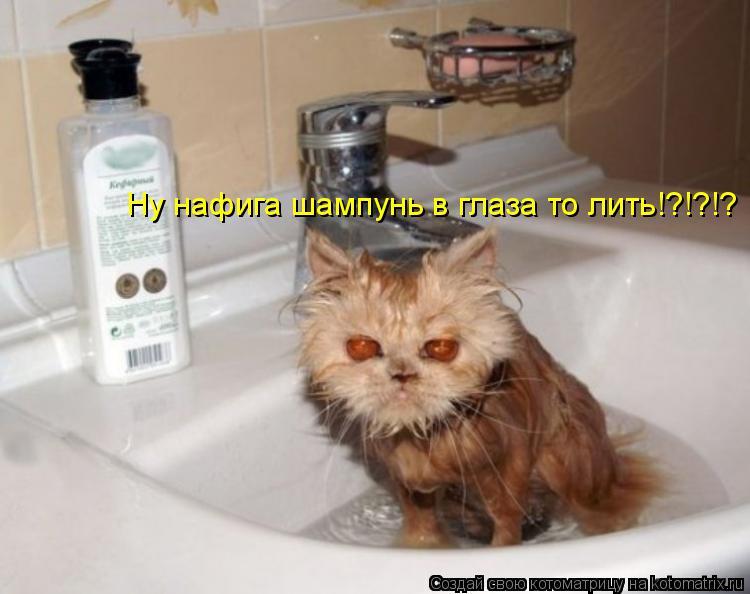 Котоматрица: Ну нафига шампунь в глаза то лить!?!?!?
