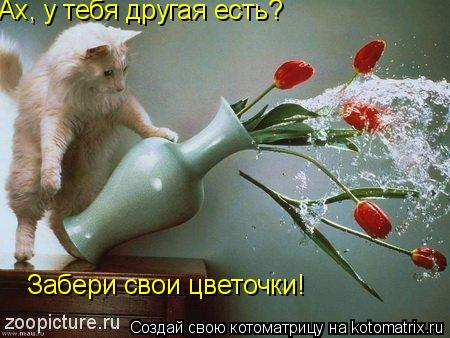 Котоматрица: Ах, у тебя другая есть? Забери свои цветочки!