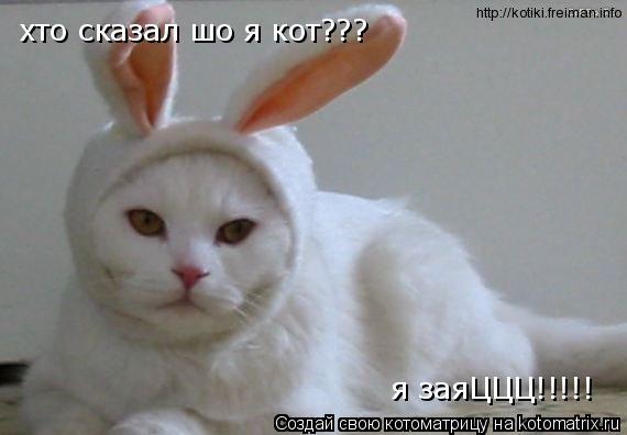 Котоматрица: хто сказал шо я кот??? я заяЦЦЦ!!!!!