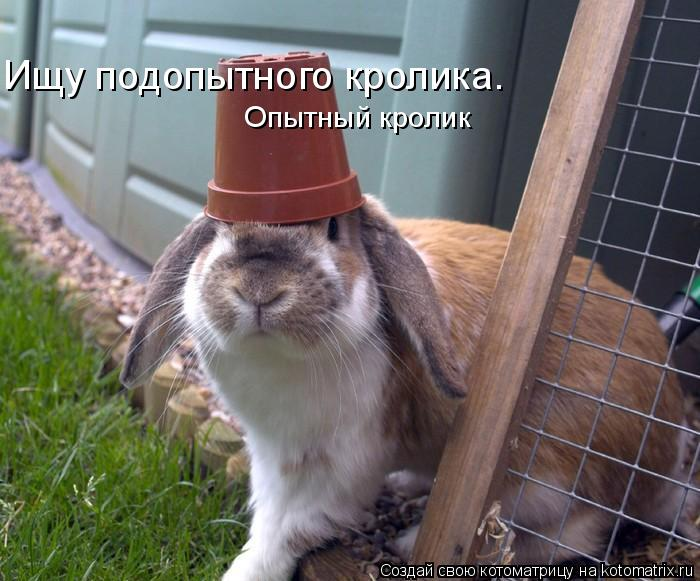 Котоматрица: Ищу подопытного кролика. Опытный кролик