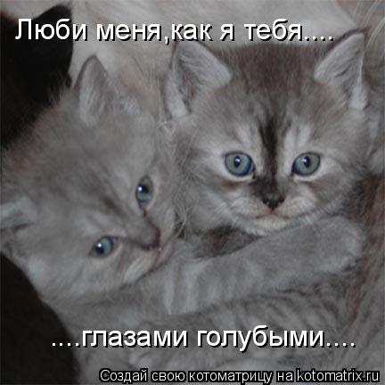 Котоматрица: Люби меня,как я тебя.... ....глазами голубыми....