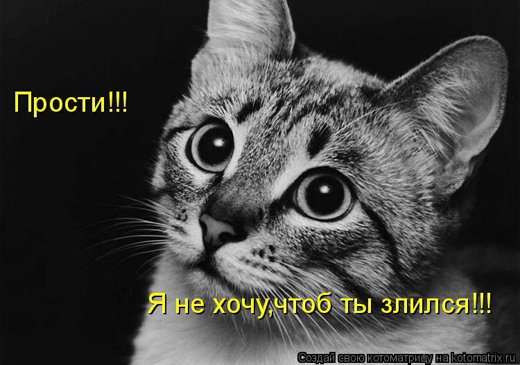 Котоматрица: Прости!!!  Я не хочу,чтоб ты злился!!!