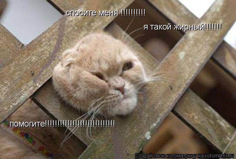 Котоматрица: спосите меня !!!!!!!!!! я такой жирный!!!!!!!  помогите!!!!!!!!!!!!!!!!!!!!!!!!!!!!