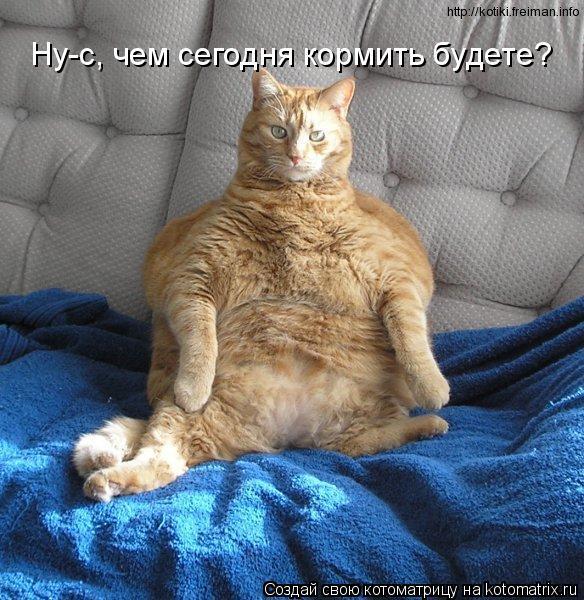 Котоматрица: Ну-с, чем сегодня кормить будете?