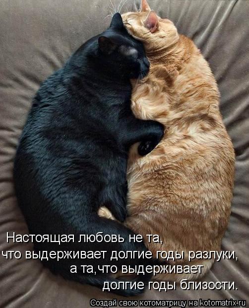 Котоматрица: Настоящая любовь не та, что выдерживает долгие годы разлуки, а та,что выдерживает долгие годы близости.