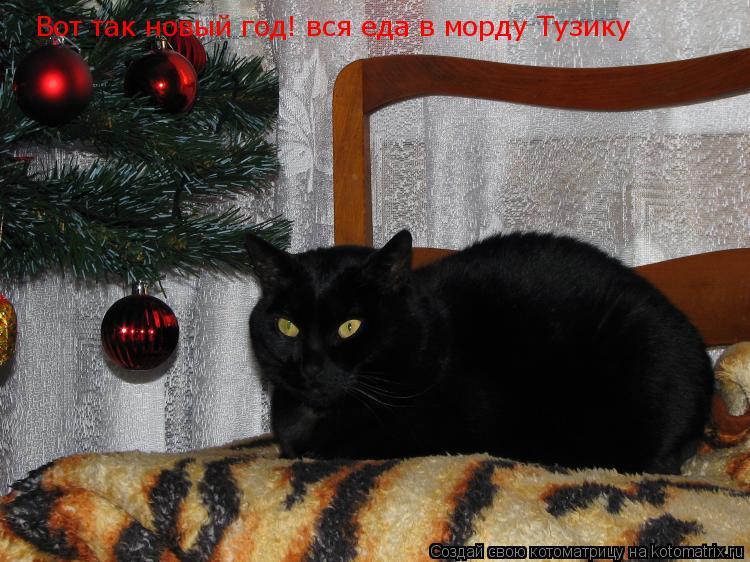 Котоматрица: Вот так новый год! вся еда в морду Тузику
