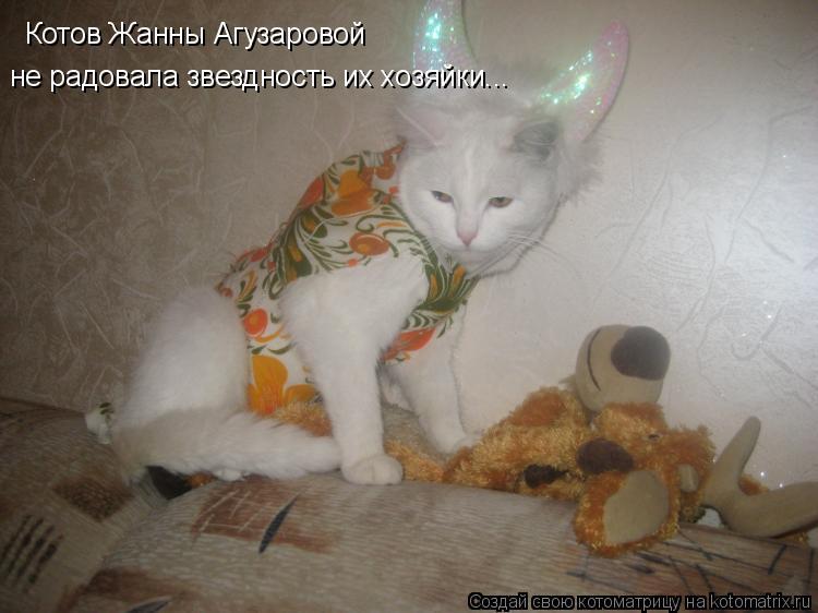Котоматрица: Котов Жанны Агузаровой не радовала звездность их хозяйки...