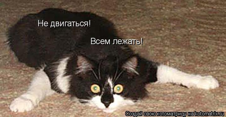 Котоматрица: Не двигаться! Всем лежать!