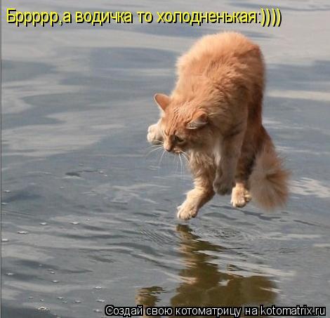 Котоматрица: Бррррр,а водичка то холодненькая:))))