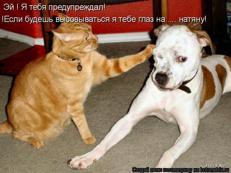 Котоматрица: Эй ! Я тебя предупреждал! !Если будешь высовываться я тебе глаз на .... натяну!